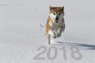 年賀状無料素材 2018年は柴犬の写真入でかわいさUP