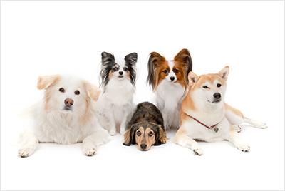 ふぉとさいく の柴犬写真3
