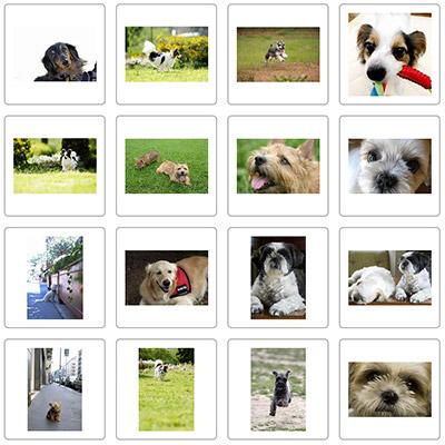 犬の無料写真素材