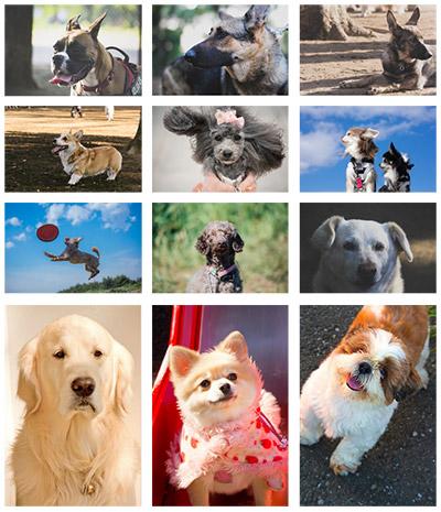 元気な犬のアクション、表情豊かな写真ならぱくたそ。