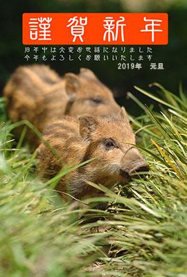 猪の写真入り平成31年無料テンプレート1