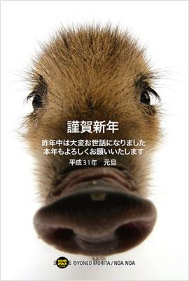 猪の写真入り平成31年無料テンプレー3