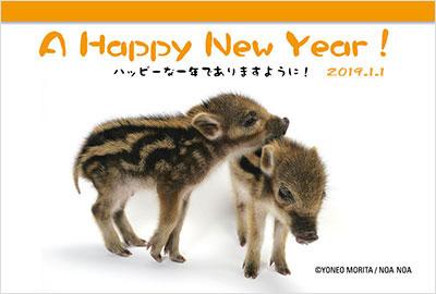 猪の写真入り平成31年無料テンプレー4