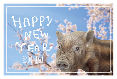 猪の写真入り平成31年無料テンプレー2