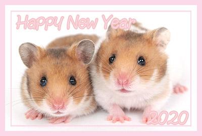 鼠の写真入り令和2年無料テンプレー2