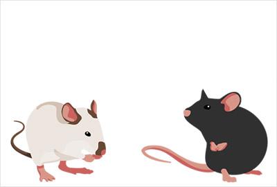 干支ネズミのかわいい無料イラスト