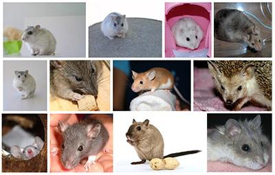 愛嬌の鼠くんがたくさん登場してくれています。