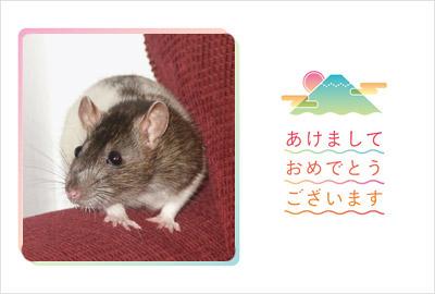 愛くるしい子ネズミの写真を入れてみました。